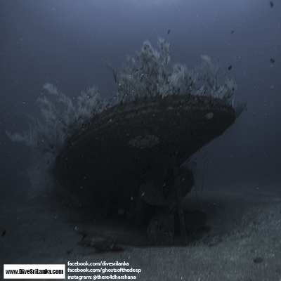 Ghosts of the deep Page VII - Black Coral Wreck